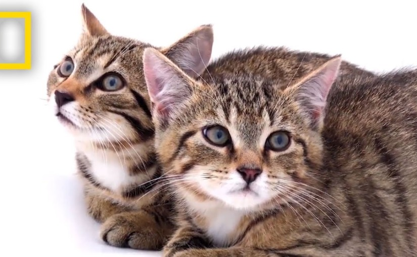 Rescued Scottish Wildcat kittens among last of theirkind