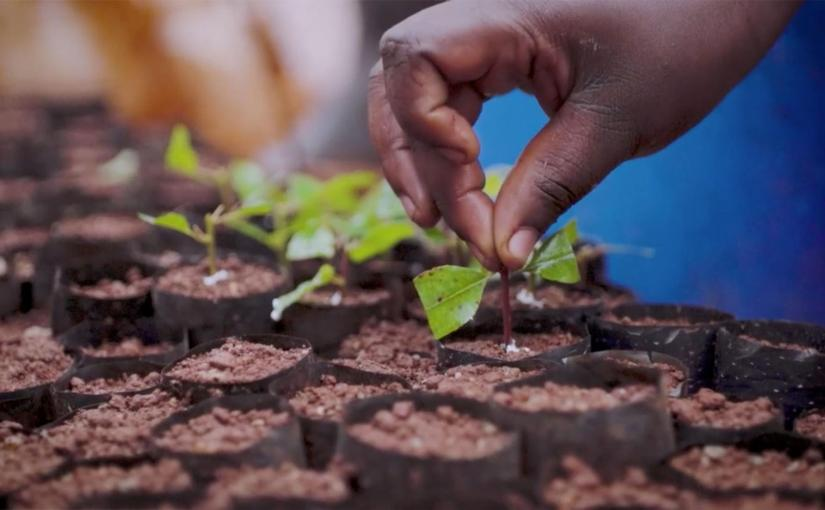 How sustainable plantations help save Uganda's decimatedforests