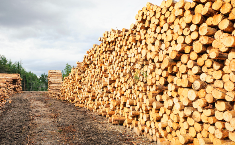 Tracking it back: a new standard to support responsible use of wood justpublished